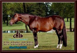 zips chocolate_chip